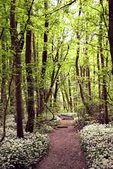 passageway (Niels van Bemmel) Tags: sun holland tree forest nikon path pad nederland thenetherlands bos flevoland d3100