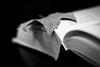 hojas y letras (amargureiro) Tags: blackandwhite bw blancoynegro leaves book 50mmf18af d80