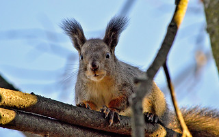 Do you have some nuts? :-)
