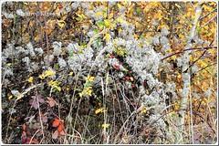 © • Herbst Impressionen • (M.A.K.photo) Tags: autumn nature germany bayern deutschland bavaria herbst natur impressions impressionen unterfranken herbstimpressionen lowerfranconia autumnimpressions photospourtousphotosforall