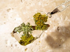 Lichen, Xanthoria sp. and the other necklace (chaerea) Tags: canada nature bc jewelry jewellery fungi lichen mycology xanthoria