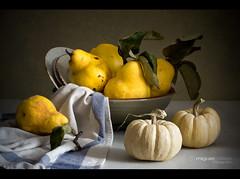 BODEGN CON MEMBRILLOS (Miguel Calleja) Tags: bodegn stilllife naturemorte naturamorta membrillo coing quince calabaza pumpkin citrouille