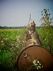wheel (Timoleon Vieta II) Tags: life playing feet wheel cat outdoors freedom kitten dancing circus happiness balance savannah bulgakov timoleon