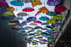 the shield (paracelsus852) Tags: umbrella zurich dach schirme summiluxm50mmf14asph fraugerold