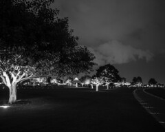 Aspire Park @ night (steve..adcock) Tags: light blackandwhite bw tree night clouds doha aspirepark niksilverefexpro omdem1