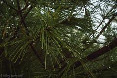 IMG_1935 (hillarycharris) Tags: morning trees mist nature fog sunrise canon landscape outdoors foggy tamron morningmist naturephotography morningfog mistymorning treesinfog foggytrees foggylandscape sunrisephotography treesinmist mistylandscape canonrebelt5 canoneost5