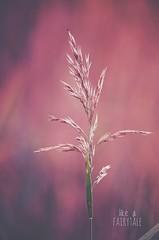 ... (***toile filante***) Tags: plant pflanze nature natur poetic poetisch soulful fairytale mrchen macro makro details