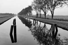 Fr Schwarz-Wei-Freunde - For Friends of black and white (antje whv) Tags: emsjadekanal kanal reflection spiegelung bume trees schwarzweis blackandwhite
