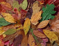 Autumn fall leafs wall art design (6) (Simon Dell Photography) Tags: autumn leafs leaves fall season winter color design wall art poster image simon dell photography white background awsome old new sheffield collection stunning xxx hackenthorpe photo war medals red yellow green brown