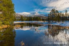 IMG_9396 (norwegen-fotografie.de) Tags: norw norwegen norway norge femunden femundsmarka villmark hedmark see wildnis wald landschaft