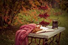autumn (olli_loo) Tags: autumn autumnbeauty autumncolours tea cupoftea cozy wouldyoulkesometea book scarf zinger snowballtree table vivitar90 vivitar 90mm manual manuallens manualfocus cozydecor cozyautumn cozytime outdoor