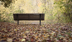 Waiting (Ghorvei) Tags: ghorvei ghorveiphotography canada canon autumn ontario colourful bench lonely waiting leaves orange lowvillepark river water leaf ef35mmf14liiusm tree park nature light trees