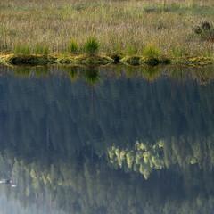 Kleiner Arbersee V (schauplatz) Tags: bayerischerwald bayerwald deutschland lamerwinkel urlaub kleinerarbersee landscape seascape lake karsee bavarianforest square quadratisch spiegelbild mirrorimage spiegelung tarn cirquelake