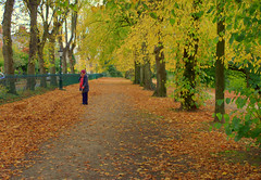 Autumnal walkway in Preston (Tony Worrall) Tags: preston north northwest lancs lancashire england northern uk update place location visit area county attraction open stream tour country welovethenorth unitedkingdom seasonal season autumn fall avenham trees outdoors color colourful autumninpreston lovey natural nature leaves