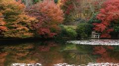 Silence of autumn / Ryoan-ji Kyoyochi Pond (maco-nonchR) Tags: autumn fall trees pond temple ryoanji japanese garden unescoworldheritagesite kyoyochi   kyoto kioto