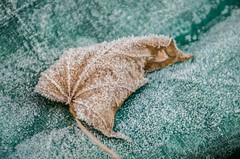 Frost 30/11/16 (ENRYCH BUCKS A local charity bringing life, leisur) Tags: enrych photograghy group pentax aylesbury frost freezing cold leaf web weather trees lightroom autumn sun garden