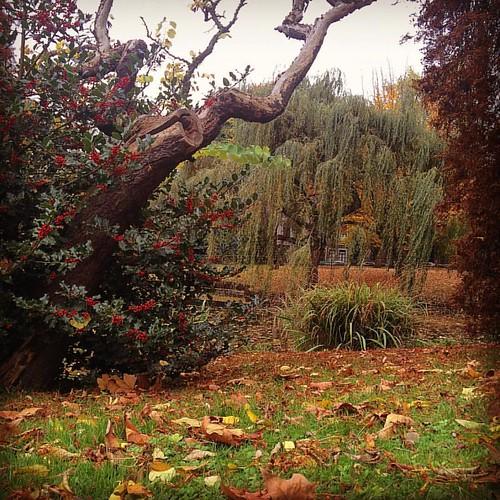 Bonne après midi... #instantsfigés #instagood #followme #picoftheday #photooftheday #autumn #autumncolors #liege #jardinbotanique #christophetoffolo #toffographie