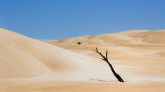 Tree and sand #2 (RWYoung Images) Tags: rwyoung canon 5d3 southaustralia sand sanddune dune arid tree beach