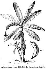 Anglų lietuvių žodynas. Žodis abaca reiškia n 1. abaka; 2. pluoštinis bananas lietuviškai.