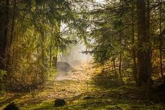 Morgenwald (maka3110) Tags: todaysbest nebel wald spatziergang sonne herbst schnee ladis prutz tirol austria sterreich mystisch wood nikon sigma 1770 nikond7100
