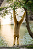 _MGL2984.jpg (shutterbugdancer) Tags: whitecheekedgibbon gorilla jackie rasha bowie fred africanlion westernlowlandgorilla zebra elephant asianelephant gracie bluebonnet elmo belle fortworthzoo gus winifred nubianibex booatthezoo