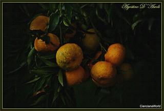 Composizione con mandarini di Sicilia - Novembre-2016
