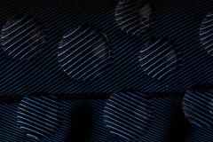 blue jay way (Marc McDermott) Tags: feather blue jay nature macromondays beatlesbeetles