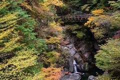 32Mitarai Valley (anglo10) Tags:   japan    valley autumnleaves   bridge