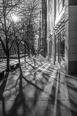 Incidence & Reflection (Jay:Dee) Tags: topw toronto photo walk black white bw shadow reflection urban