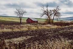 Seasons Wither (Pedalhead'71) Tags: rosalia washington abandoned barn palouse
