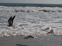 Envol (Lise1011) Tags: olympus olympusomd plage beach daytonabeach seagulls vague clouds mouettes water mer ocean