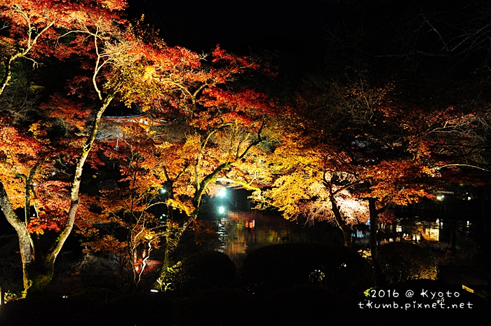 2016醍醐寺夜楓13.JPG