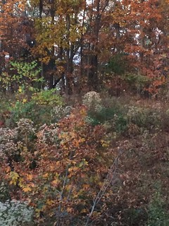 Kentucky Whitetail Hunt 3