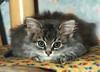 00365 (d_fust) Tags: cat kitten gato katze 猫 macska gatto fust kedi 貓 anak katt gatito kissa kätzchen gattino kucing 小貓 고양이 katje кот γάτα γατάκι แมว yavrusu 仔猫 का skorpi बिल्ली बच्चा