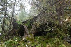 Nationalpark Hohe Tauern in der Umgebung der Rudolfshtte am Weisee-bw_20150926_2701.jpg (Barbara Walzer) Tags: uttendorf nationalparkhohetauern weissee gletscherwelt berghotelrudolfshtte weisseegletscherwelt alpinzentrumrudolfshtte 260915