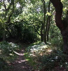 dappled sunlight walk - Heritage open weekend (annetownshend) Tags: wood woodland footpath