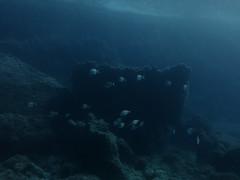 Breams, Anchor Reef, Gozo (yayapapaya77) Tags: fish rocks underwater diving malta fisch mediterraneansea gozo felsen tauchen unterwasser mittelmeer brassen breams anchorreef canonpowershotg15