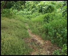 Avoid this path @  Maharashtra Nature Park (Indianature14) Tags: india nature forest october bombay maharashtra mumbai 2015 cityforest mmrda indianature mahimnaturepark maharashtranaturepark mumbaiforest