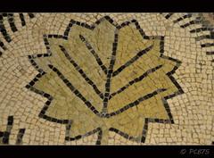(PCB75) Tags: barcelona museum mac museu mosaic mosaico catalonia catalunya museo montjuich fulla catalogna detall catalogne verda teselas museudarqueologiadecatalunya tessel·les decoraciómusiva