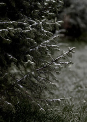 thorny weather (monorail_kz) Tags: autumn snow grey cloudy overcast foliage dull jupiter37a