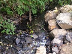 seeking solitude (dolanh) Tags: creek brewing stream lucas company salem brewpub gilgamesh gilgameshbrewingcompany