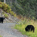 Vimos 4 ursos pretos!