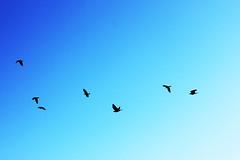 Flight II (Isengardt) Tags: sky nature birds canon germany deutschland eos 50mm fly high wings europa europe natur flight himmel shades vgel fliegen flug flgel badenwrttemberg hoch shadesofblue 550d schattierungen differentshadesofblue blauschattierungen