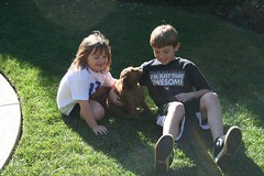 max-in-his-new-backyard-with-his-new-brother-and-sister--loving-ca-_4243050410_o