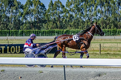 DSC05126.jpg (The Digital Birdcage) Tags: horseracing burnoff harnessracing race8 ashburtonraceway colindefilippi