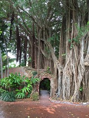 Key West Garden Club at West Martello Tower - Banyan Gate (escriteur) Tags: gate florida fort tunnel keywest banyan banyantree img1987 westmartellotower joeallengardencenter westmartello keywestgardenclub fortwestmartello westmartellofort