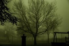 nebbie (andreabotti567) Tags: fog italia canon5d nebbia travagliato autochinon55mmf14