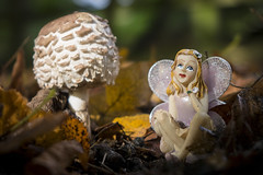 mushroom forest (Mark Rigler UK) Tags: small model girl wings fantasy fairy mushroom grass make belive faery faerie sprit mythical being legendary creature land toy doll people outdoor animal