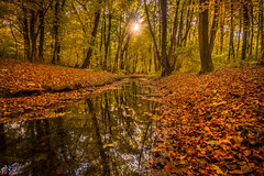 Golden autumn 5 (JTPhotography) Tags: autumn golden leaves trees nature water reflections sunny wildlife rivers lake panasoniclumixg6 olympus918mm