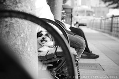 People are very busy (Ricardas Jarmalavicius) Tags: nikon blackandwhite blackandwhitephotography blackwhite noiretblanc adorenoir bw bnw photography photographize photooftheday photographie photo popphotocom popphoto newyork newyorkcity nyc hudsonriverpark dogs dog pets city people flickr flickrheroes flickrsocial puppy beauty lonely alone 121clicks 500px eyephoto viewbug ricardasjarmalavicius jarmalavicius street streetphotography straat bestphoto instagram animalplanet monochrome d depthoffield